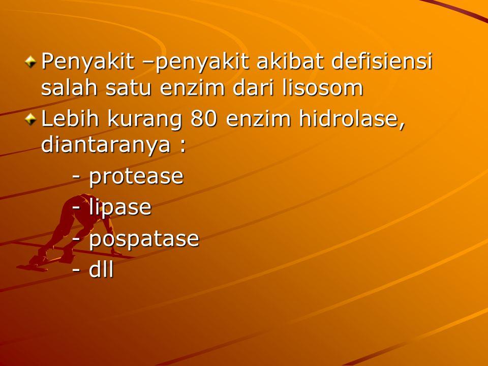 Lisosom Berbentuk granula de Duve dkk pada tahun 1955 Lysis dan soma = badan untuk mencerna Enzim hidrolase (acid hidrolase) Aktif pada pH 5 Aktif pad