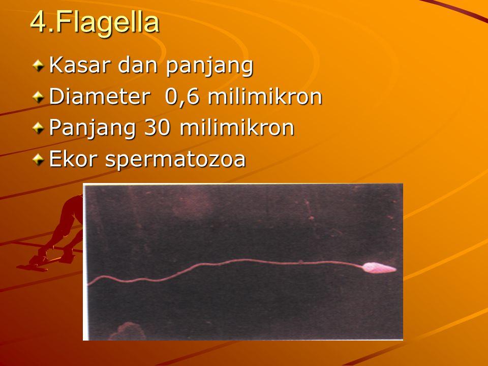 3. Cilia Diameter ± 0,20 milimikron Panjang 8 milimikron Banyak sel Sel epitel permukaan dalam saluran : - pernafasan - kelamin - indra