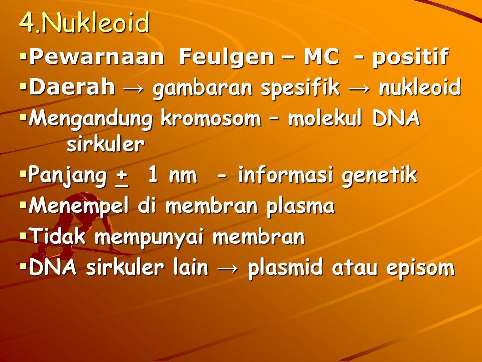  Pewarnaan Feulgen – MC - positif  Daerah → gambaran spesifik → nukleoid  Mengandung kromosom – molekul DNA sirkuler  Panjang + 1 nm - informasi genetik  Menempel di membran plasma  Tidak mempunyai membran  DNA sirkuler lain → plasmid atau episom 4.Nukleoid