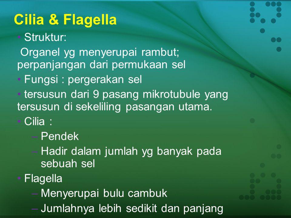 Flagella and Pergerakan  Kebanyakan prokarytote bergerak, dengan flagella  Mekanisme dasar pergerakan adalah berenang