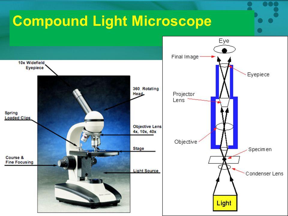 Mikroskop 1. Mikroskop cahaya (Light microscope) : menggunakan cahaya Ada beberapa jenis, yaitu: - Compound light microscopy - Darkfield microscopy -