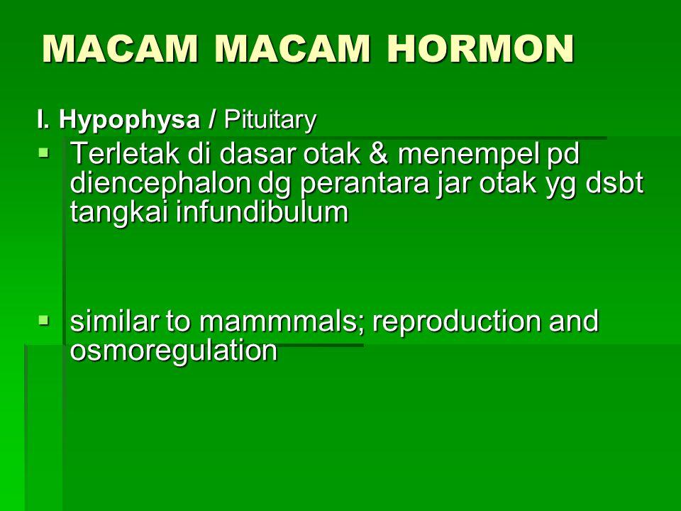 MACAM MACAM HORMON I. Hypophysa / Pituitary  Terletak di dasar otak & menempel pd diencephalon dg perantara jar otak yg dsbt tangkai infundibulum  s