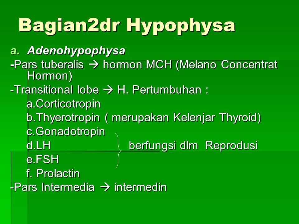 Bagian2dr Hypophysa a.Adenohypophysa -Pars tuberalis  hormon MCH (Melano Concentrat Hormon) -Transitional lobe  H. Pertumbuhan : a.Corticotropin a.C