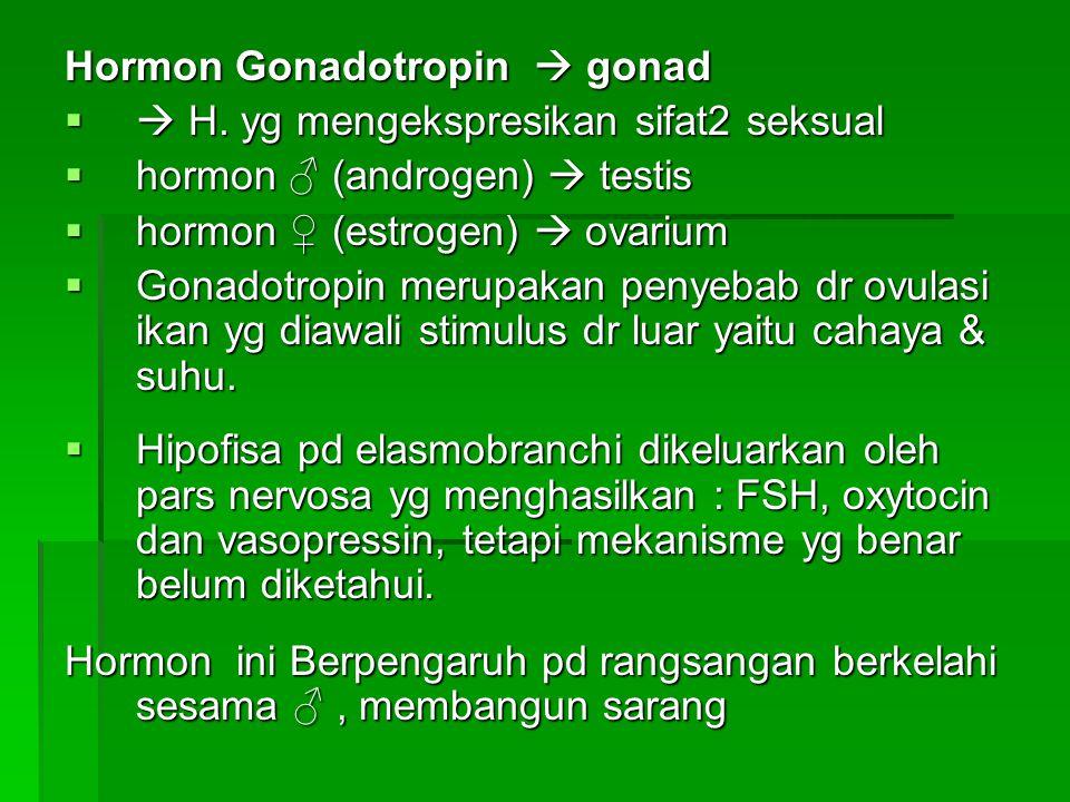 Hormon Gonadotropin  gonad  H. yg mengekspresikan sifat2 seksual  hormon ♂ (androgen)  testis  hormon ♀ (estrogen)  ovarium  Gonadotropin meru