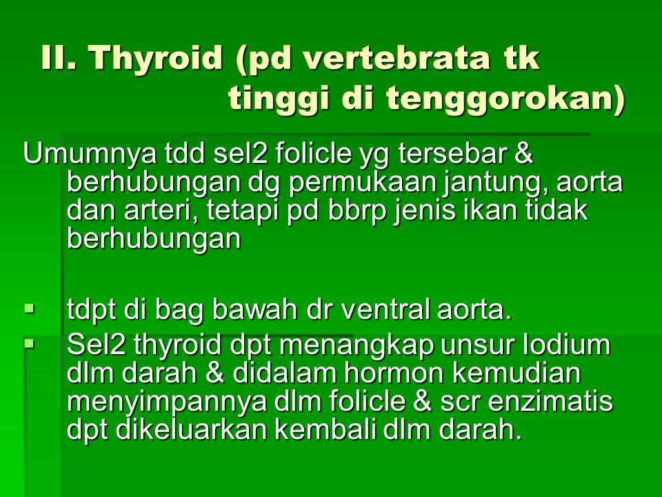 II. Thyroid (pd vertebrata tk tinggi di tenggorokan) Umumnya tdd sel2 folicle yg tersebar & berhubungan dg permukaan jantung, aorta dan arteri, tetapi