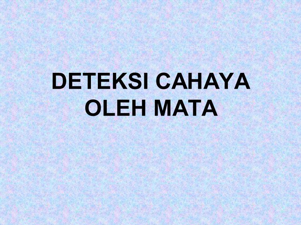 DETEKSI CAHAYA OLEH MATA
