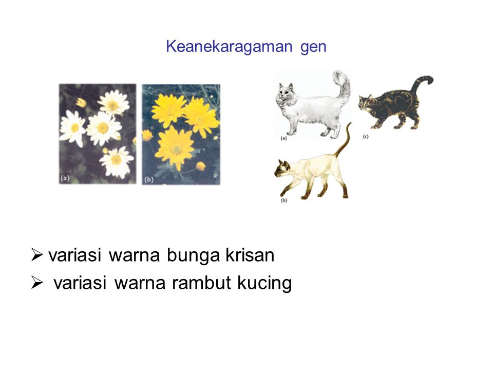 Keanekaragaman gen  variasi warna bunga krisan  variasi warna rambut kucing