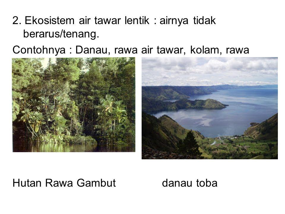 2. Ekosistem air tawar lentik : airnya tidak berarus/tenang. Contohnya : Danau, rawa air tawar, kolam, rawa gambut. Hutan Rawa Gambut danau toba