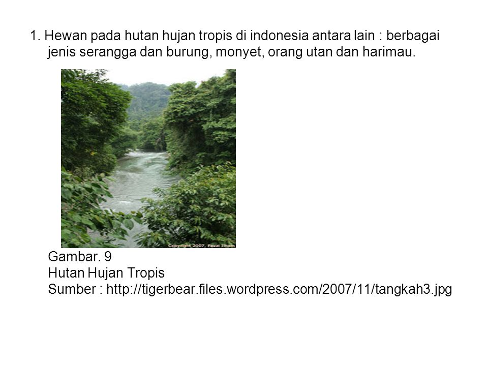 1. Hewan pada hutan hujan tropis di indonesia antara lain : berbagai jenis serangga dan burung, monyet, orang utan dan harimau. Gambar. 9 Hutan Hujan