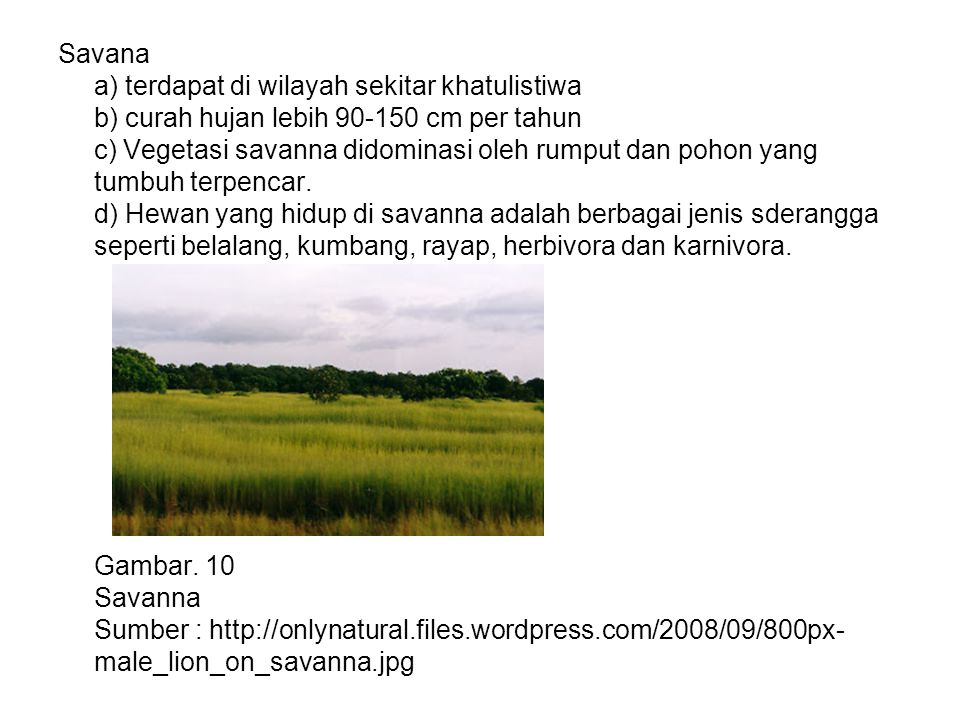 Savana a) terdapat di wilayah sekitar khatulistiwa b) curah hujan lebih 90-150 cm per tahun c) Vegetasi savanna didominasi oleh rumput dan pohon yang