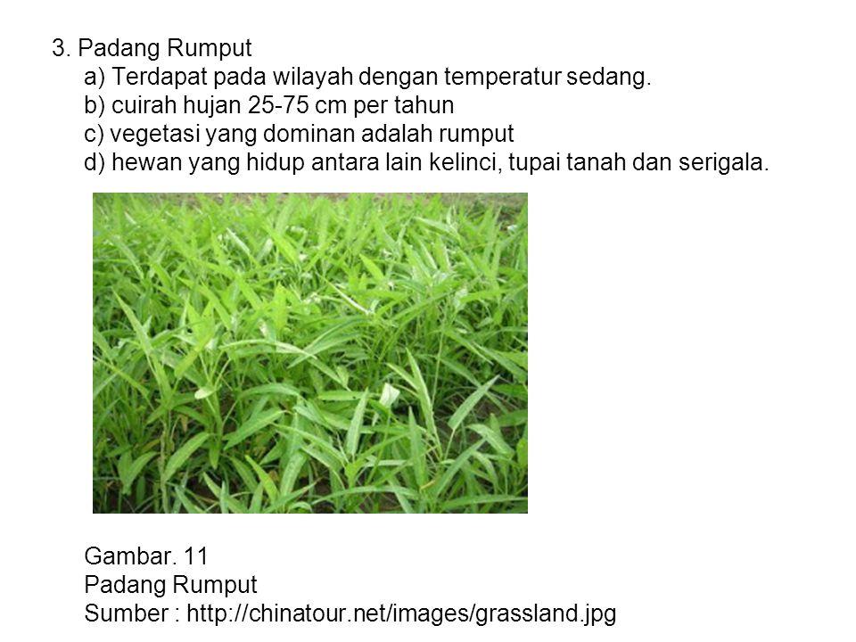 3. Padang Rumput a) Terdapat pada wilayah dengan temperatur sedang. b) cuirah hujan 25-75 cm per tahun c) vegetasi yang dominan adalah rumput d) hewan