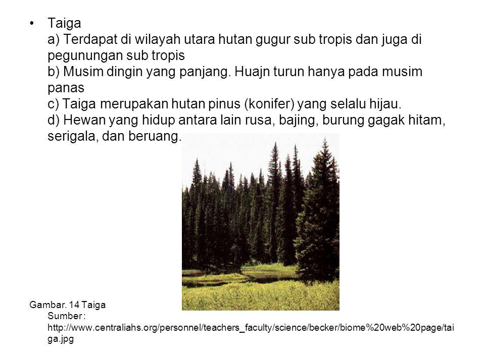 Taiga a) Terdapat di wilayah utara hutan gugur sub tropis dan juga di pegunungan sub tropis b) Musim dingin yang panjang. Huajn turun hanya pada musim