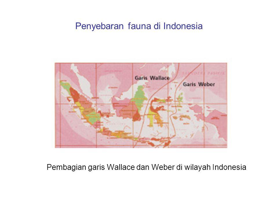 Penyebaran fauna di Indonesia Pembagian garis Wallace dan Weber di wilayah Indonesia