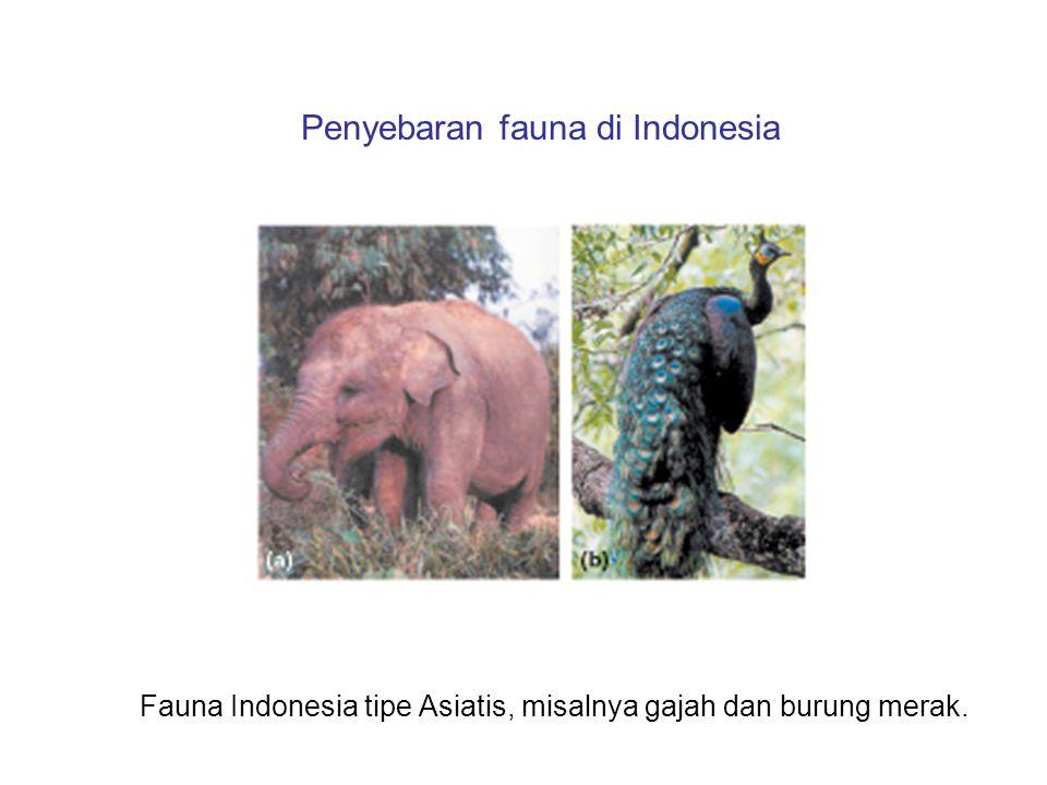 Penyebaran fauna di Indonesia Fauna Indonesia tipe Asiatis, misalnya gajah dan burung merak.
