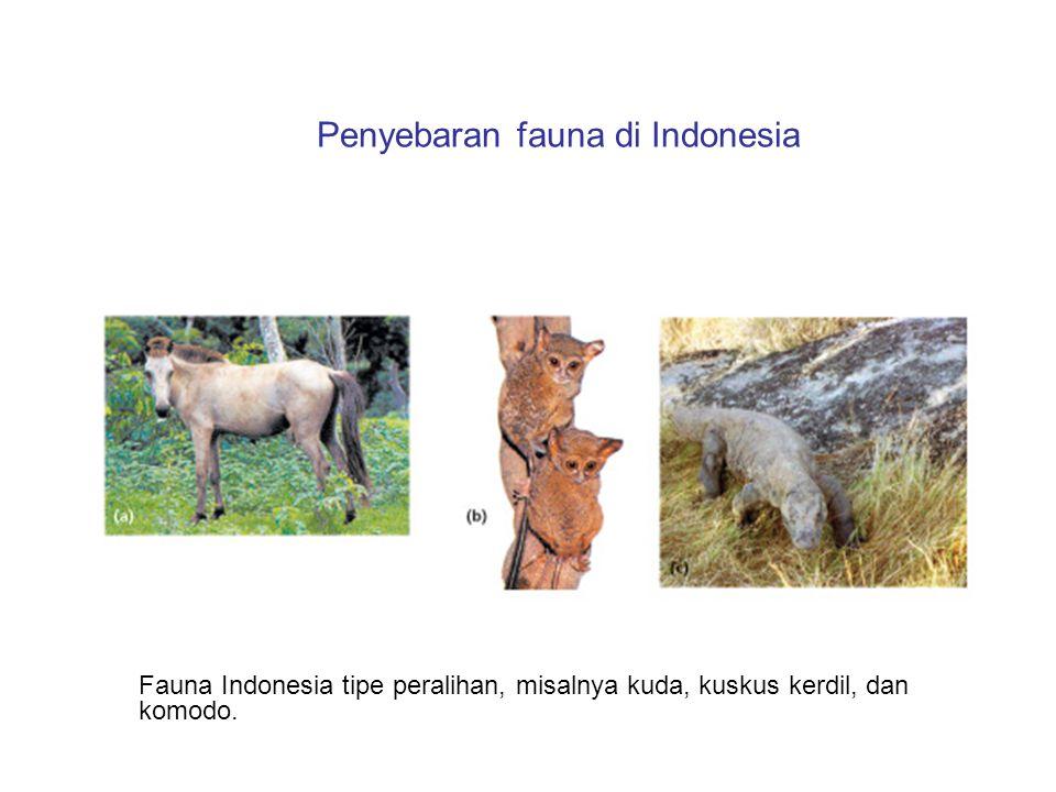 Penyebaran fauna di Indonesia Fauna Indonesia tipe peralihan, misalnya kuda, kuskus kerdil, dan komodo.