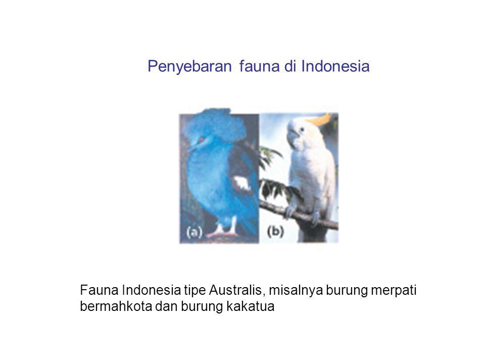 Penyebaran fauna di Indonesia Fauna Indonesia tipe Australis, misalnya burung merpati bermahkota dan burung kakatua