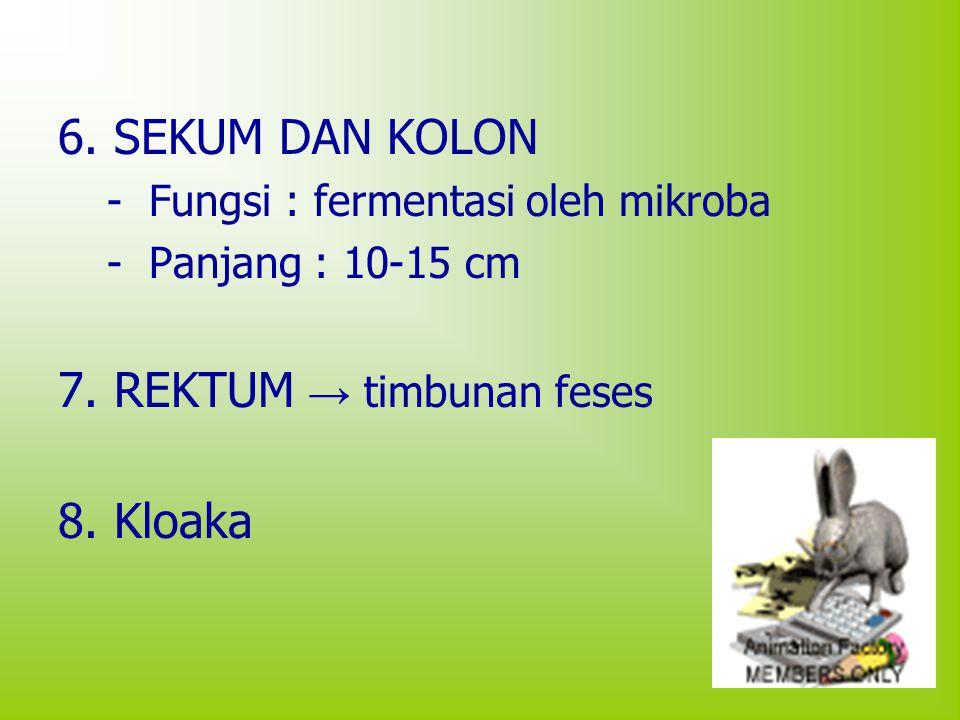 6. SEKUM DAN KOLON - Fungsi : fermentasi oleh mikroba - Panjang : 10-15 cm 7. REKTUM → timbunan feses 8. Kloaka