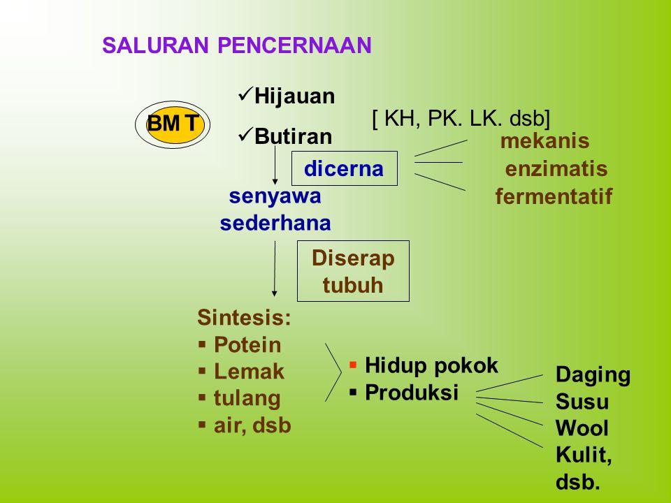 BM T SALURAN PENCERNAAN Hijauan Butiran [ KH, PK. LK. dsb] dicerna mekanis enzimatis fermentatif senyawa sederhana Diserap tubuh Sintesis:  Potein 