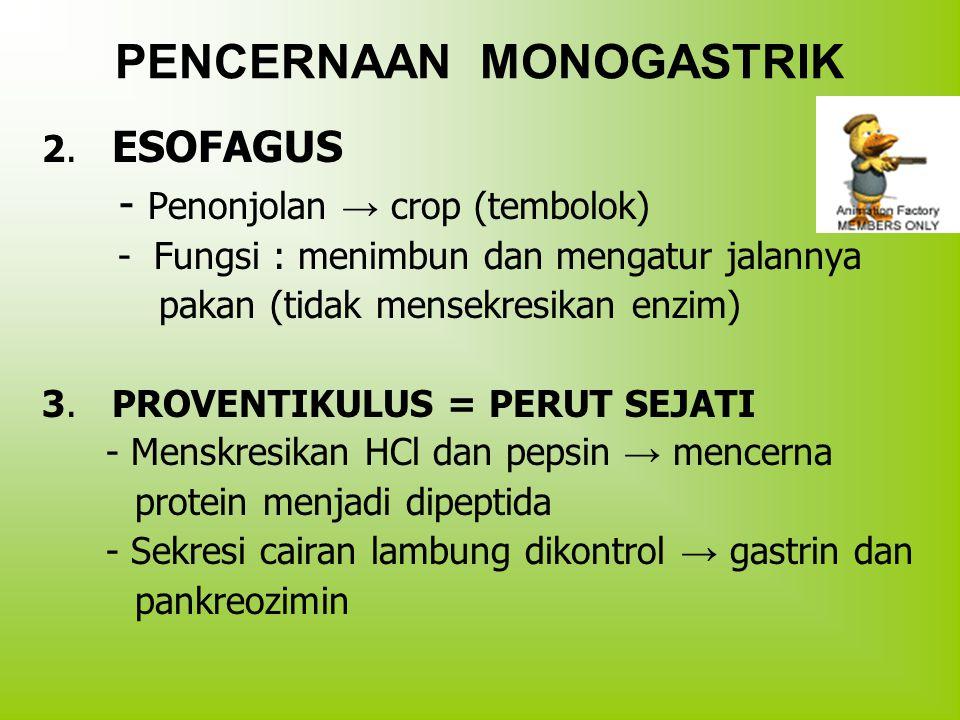 PENCERNAAN MONOGASTRIK 2. ESOFAGUS - Penonjolan → crop (tembolok) - Fungsi : menimbun dan mengatur jalannya pakan (tidak mensekresikan enzim) 3. PROVE