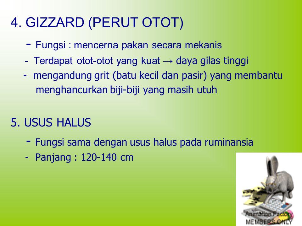 4. GIZZARD (PERUT OTOT) - Fungsi : mencerna pakan secara mekanis - Terdapat otot-otot yang kuat → daya gilas tinggi - mengandung grit (batu kecil dan
