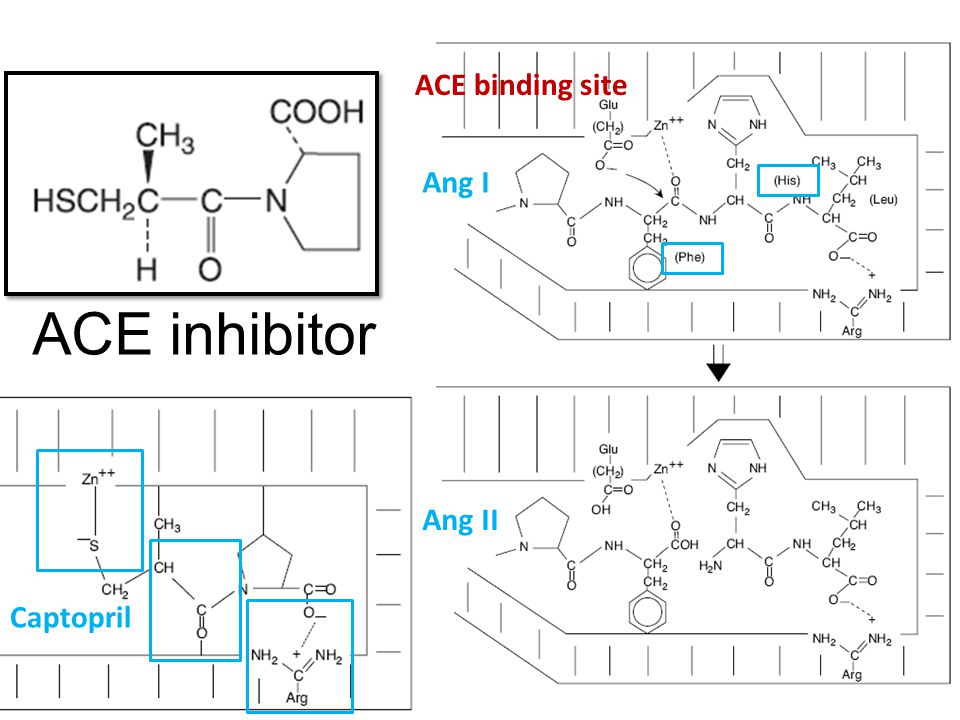 ACE inhibitor ACE binding site Ang I Ang II Captopril