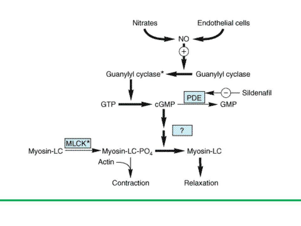 1.Obat2 simpatik bekerja sentral (metildopa dan klonidin) 2.obat2 penghambat ganglion (trimetafan) 3.obat2 penghambat saraf adrenergik (reserpin) 4.beta-bloker (atenolol) 5.alfa1-bloker (prazosin) 6.vasodilator (hidralazin, minoksidil, nitropusid) 7.Calcium Channel Blockers/CCB (nifedipin, verapamil, diltiazem) 8.ACE inhibitor (captopril) 9.Angiotensin receptor blocker/ARB (losartan)