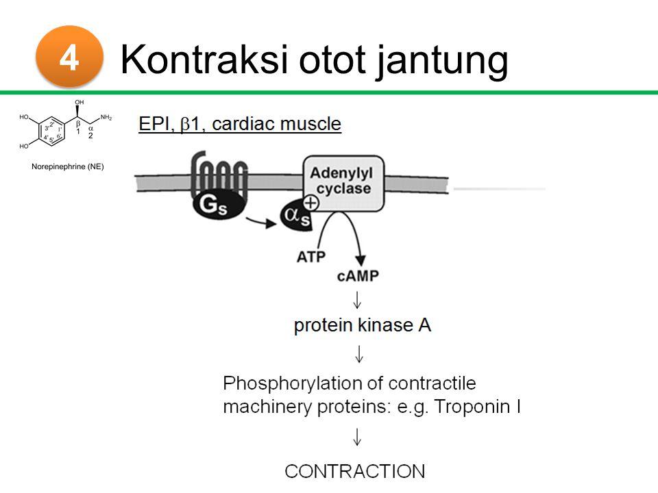 4 4 β-bloker Propanolol = ariloksipropanolamin Asumsi: Gugus yang bertanggungjawab Absorbsi, metabolisme, ekskresi Posisi para, no meta : selektivitas Amin skunder u/ Aktivitas optimal Subs: isopropil or t-but S *levobunolol, timolol, penbutolol (S only)