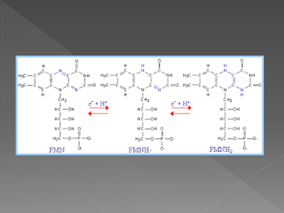  Kompleks ini terdiri dari suksinat dehidrogenase dan pusat besi sulfurnya.