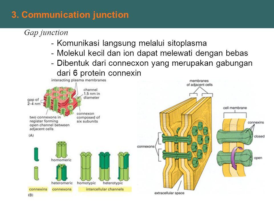 3. Communication junction Gap junction -Komunikasi langsung melalui sitoplasma -Molekul kecil dan ion dapat melewati dengan bebas -Dibentuk dari conne