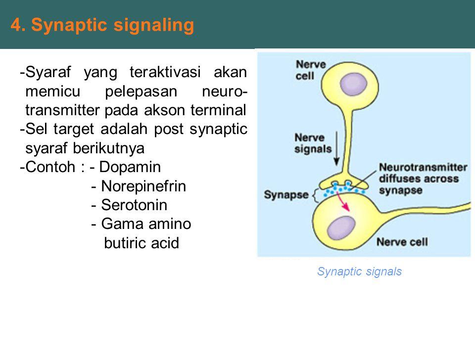 Synaptic signals 4. Synaptic signaling -Syaraf yang teraktivasi akan memicu pelepasan neuro- transmitter pada akson terminal -Sel target adalah post s