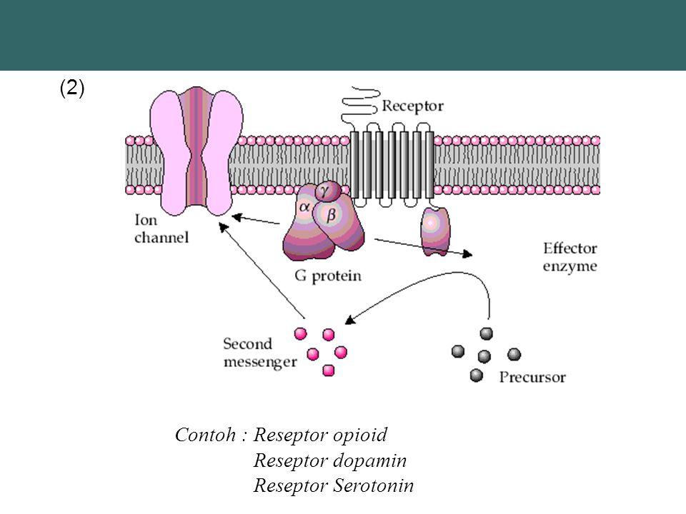 (2) Contoh : Reseptor opioid Reseptor dopamin Reseptor Serotonin