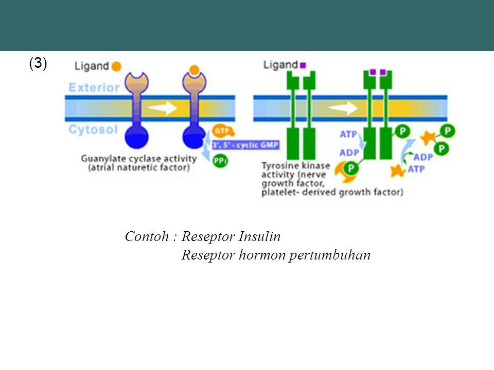 (3) Contoh : Reseptor Insulin Reseptor hormon pertumbuhan