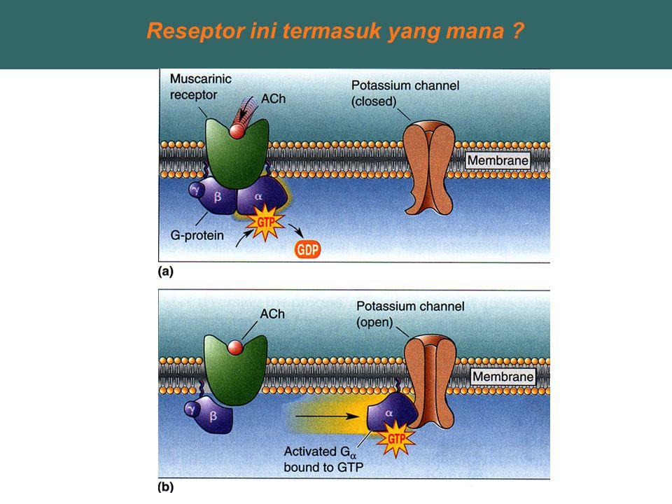 Reseptor ini termasuk yang mana ?