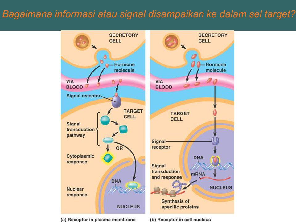 Bagaimana informasi atau signal disampaikan ke dalam sel target?