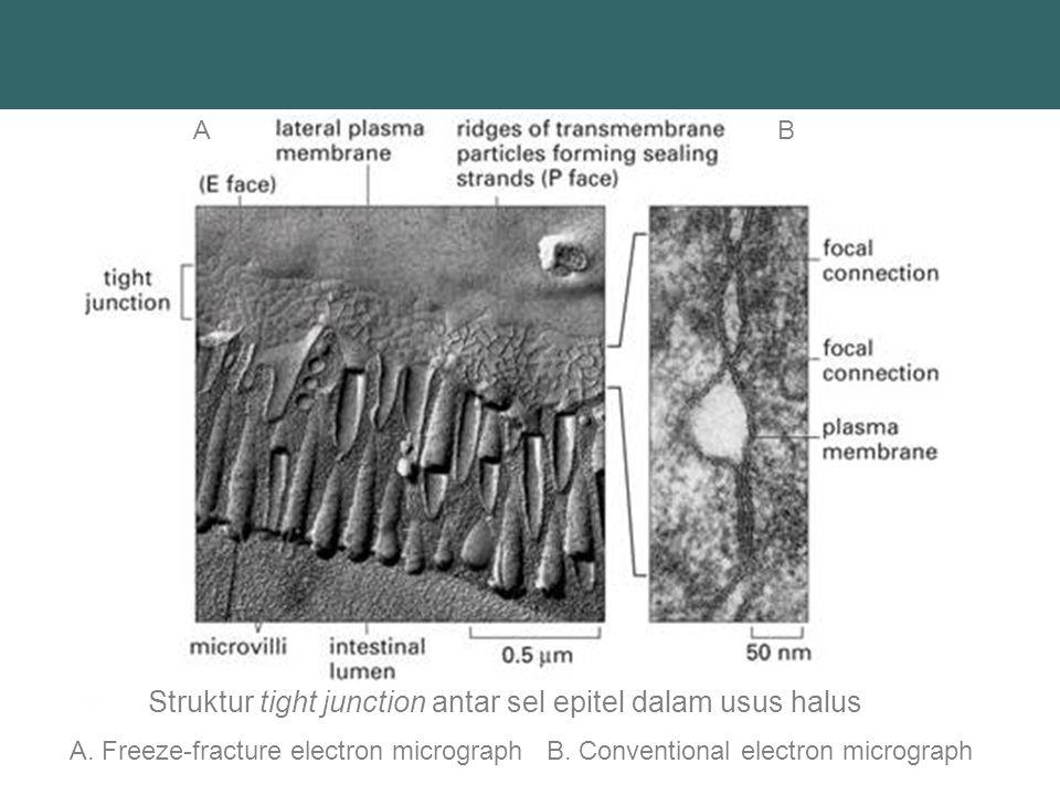 Reseptor -Penerima chemical substance dalam penyampaian informasi atau signal -Terdapat pada membran sel -Macam : 1.
