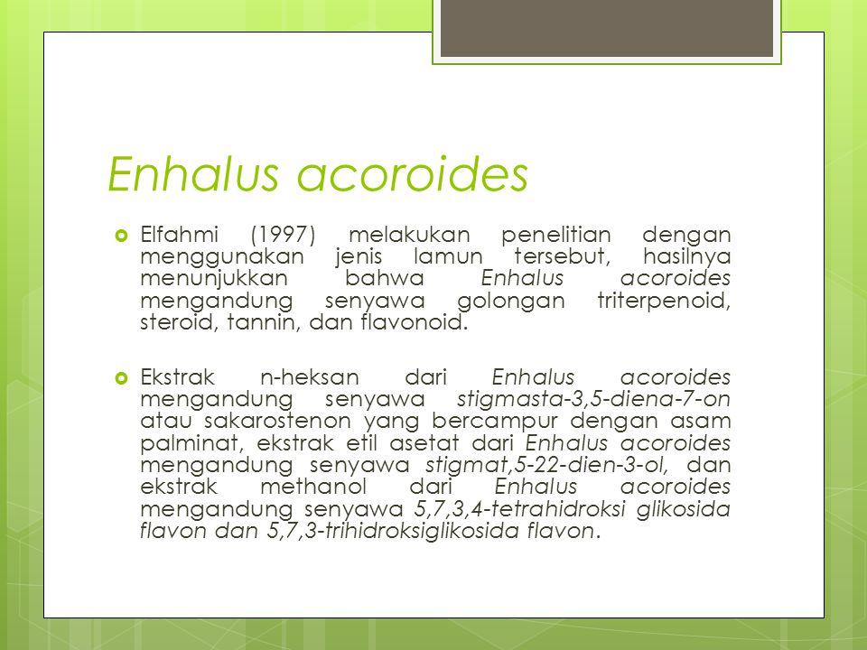 Enhalus acoroides  Elfahmi (1997) melakukan penelitian dengan menggunakan jenis lamun tersebut, hasilnya menunjukkan bahwa Enhalus acoroides mengandu