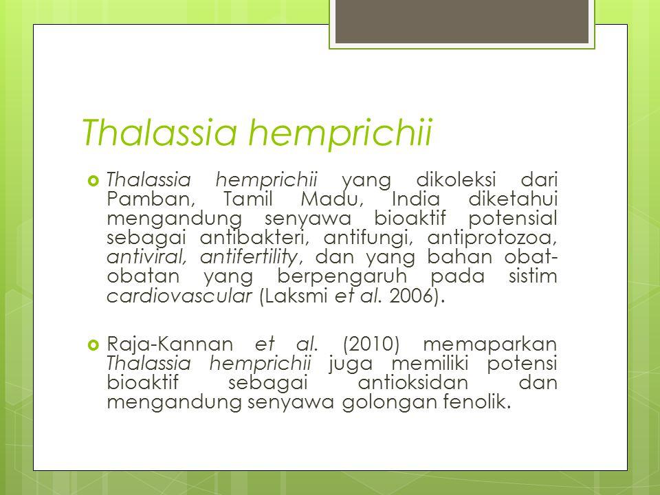 Thalassia hemprichii  Thalassia hemprichii yang dikoleksi dari Pamban, Tamil Madu, India diketahui mengandung senyawa bioaktif potensial sebagai anti