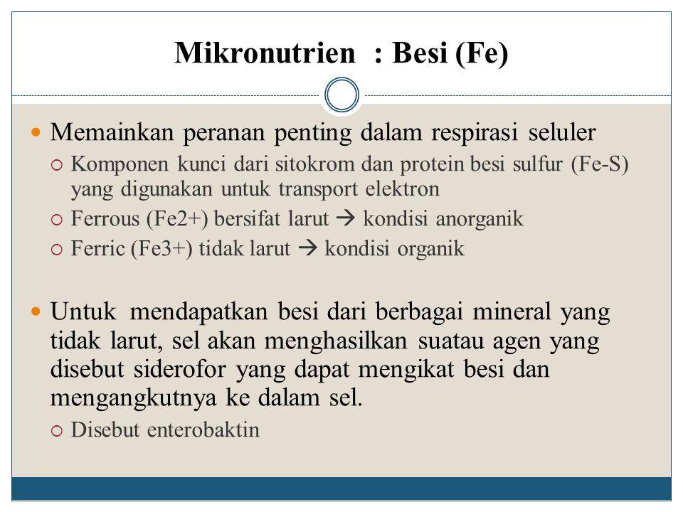 Mikronutrien : Besi (Fe) Memainkan peranan penting dalam respirasi seluler  Komponen kunci dari sitokrom dan protein besi sulfur (Fe-S) yang digunaka
