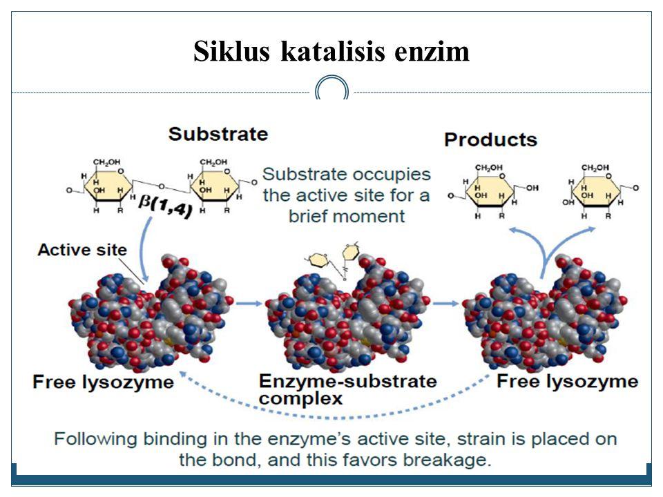 Siklus katalisis enzim