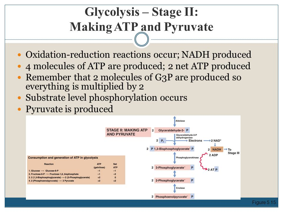Glycolysis – Stage II: Making ATP and Pyruvate Oxidation-reduction reactions occur; NADH produced 4 molecules of ATP are produced; 2 net ATP produced