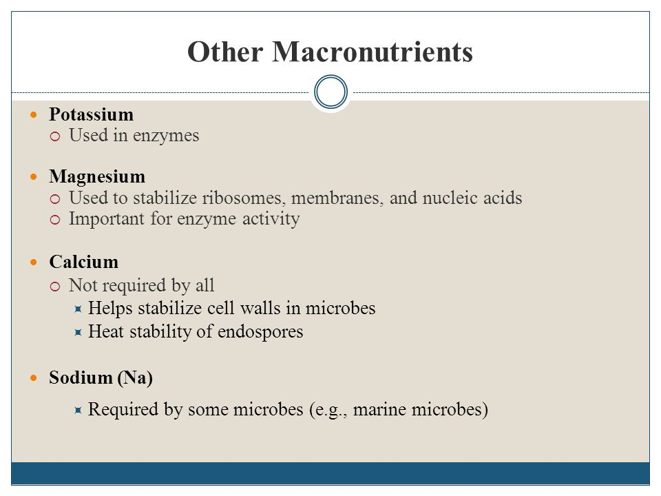 Other Macronutrients Potassium  Used in enzymes Magnesium  Used to stabilize ribosomes, membranes, and nucleic acids  Important for enzyme activity