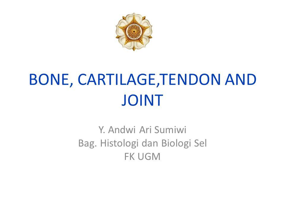 Matriks Cartilago