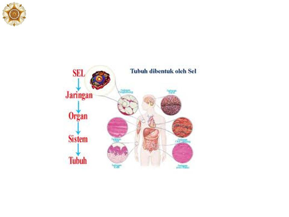 Cartilago Berdasarkan variasi komponen, terdapat 3 tipe cartilago: – Cartilago hyalin (hidung, costa, trachea) – Cartilago elastic (auricula, epiglottis) – Fibrocartilago (discus intervertebralis)