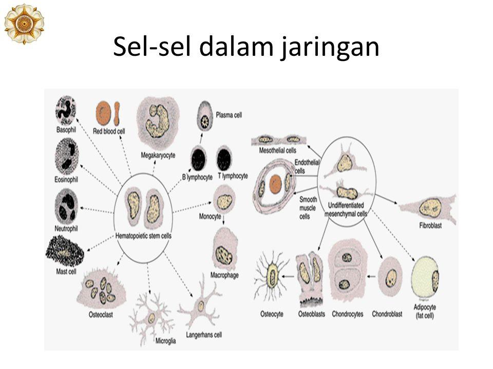 Insersi Otot ke dalam Tulang