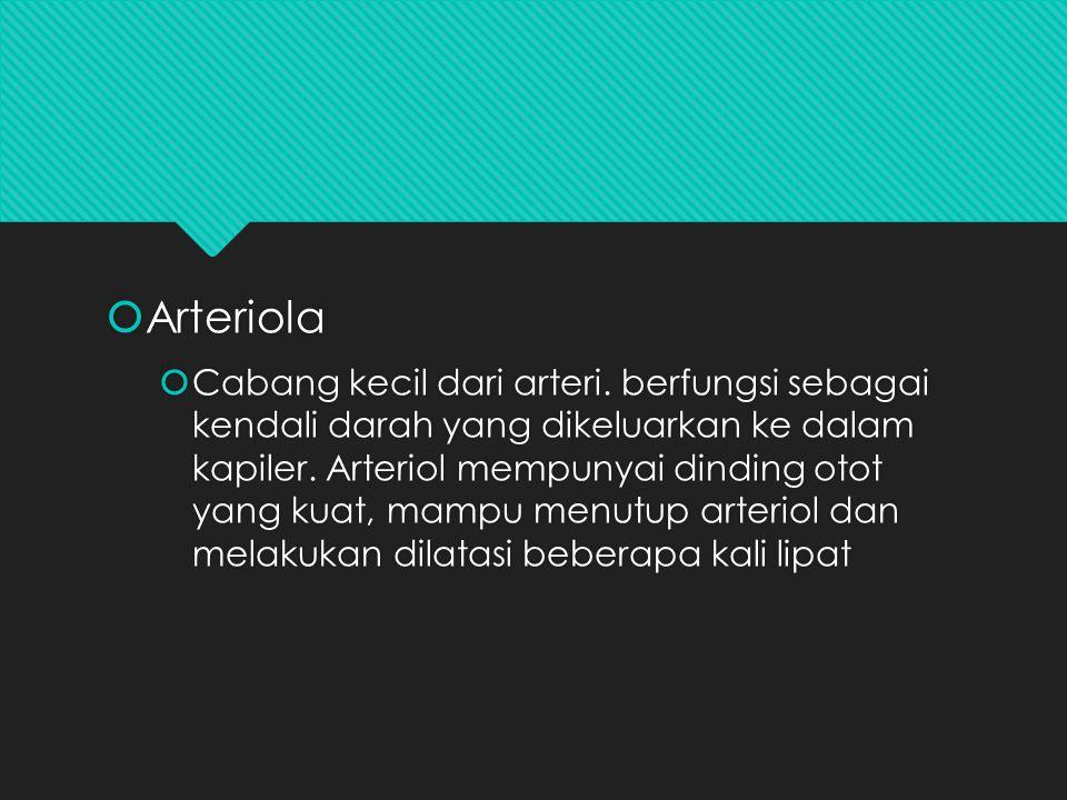  Arteriola  Cabang kecil dari arteri. berfungsi sebagai kendali darah yang dikeluarkan ke dalam kapiler. Arteriol mempunyai dinding otot yang kuat,