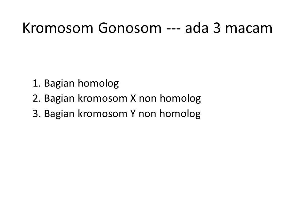 Kromosom Gonosom --- ada 3 macam 1. Bagian homolog 2. Bagian kromosom X non homolog 3. Bagian kromosom Y non homolog