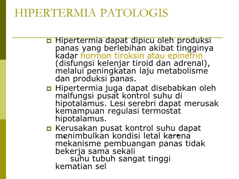 HIPERTERMIA PATOLOGIS  Hipertermia dapat dipicu oleh produksi panas yang berlebihan akibat tingginya kadar hormon tiroksin atau epinefrin (disfungsi
