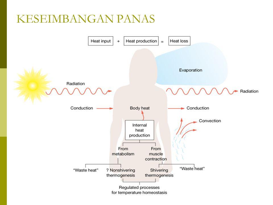 HEAT STROKE  Merupakan kondisi yang berbahaya dimana sistem termoregulasi hipotalamus mengalami kerusakan sehingga tidak mampu lagi berrespon terhadap perubahan suhu.
