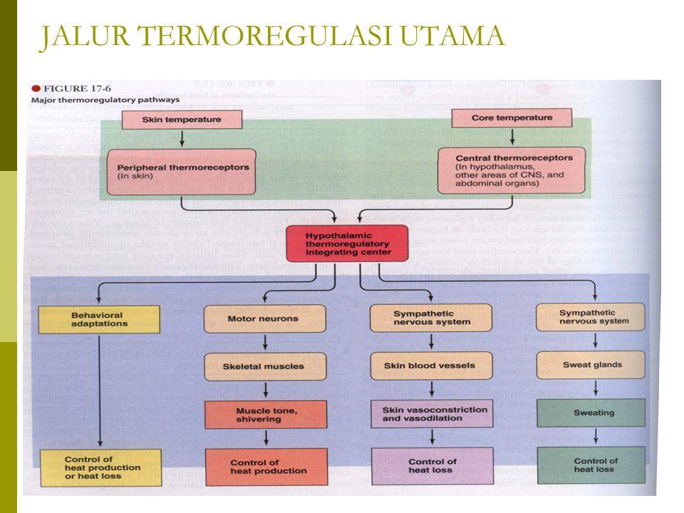 MEKANISME DEMAM  Demam merupakan adanya peningkatan panas sebagai gejala adanya infeksi atau inflamasi.
