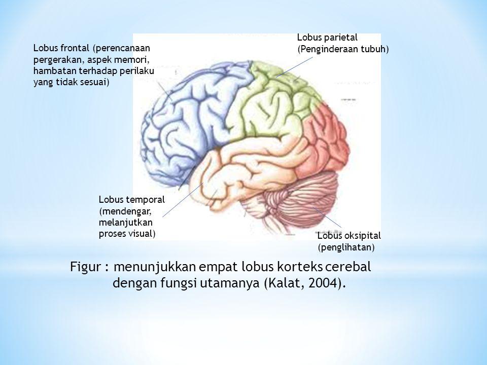 Lobus frontal (perencanaan pergerakan, aspek memori, hambatan terhadap perilaku yang tidak sesuai) Lobus parietal (Penginderaan tubuh) Lobus oksipital